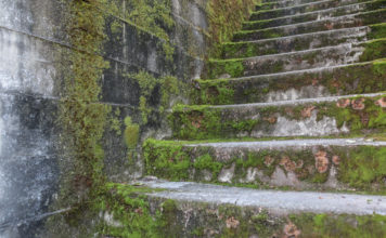 Moss Covered Stairs Seattle