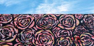 Roses & Sky